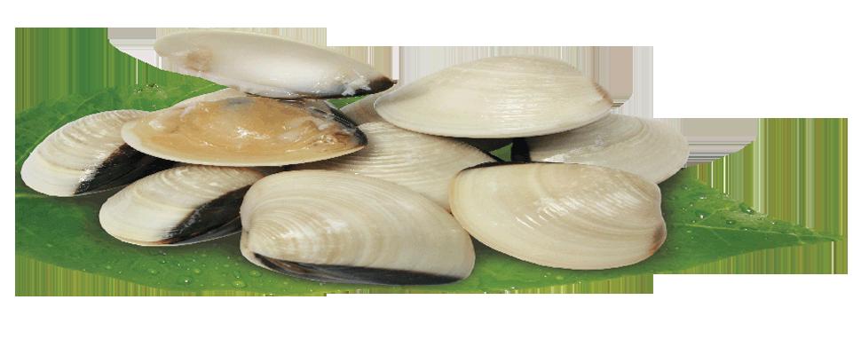 Molluse