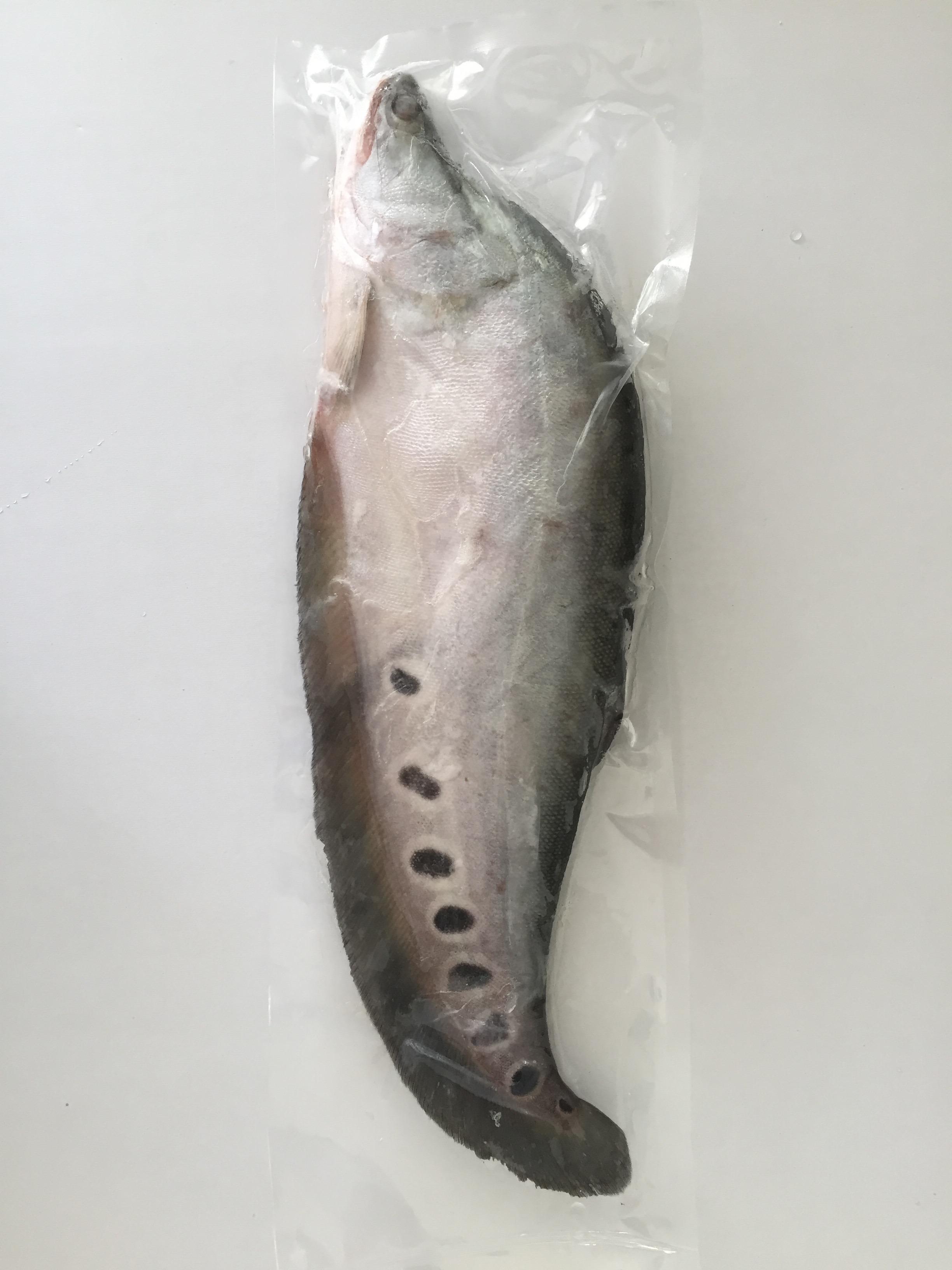Frz Featherback Fish